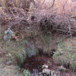 fuente buey