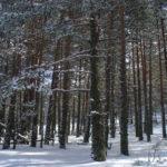 pinar albar del cerro pinoso