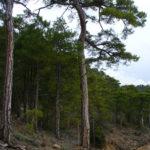 pinar de artigas