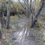 rio camarena